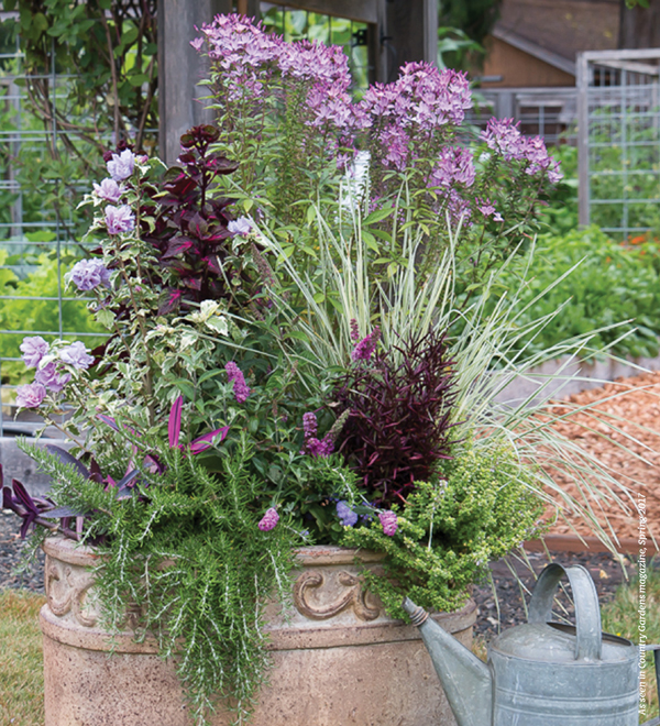 Container Gardens You'll Love