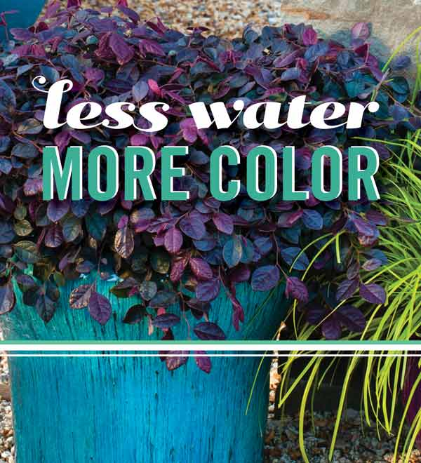 Less Water, More Color