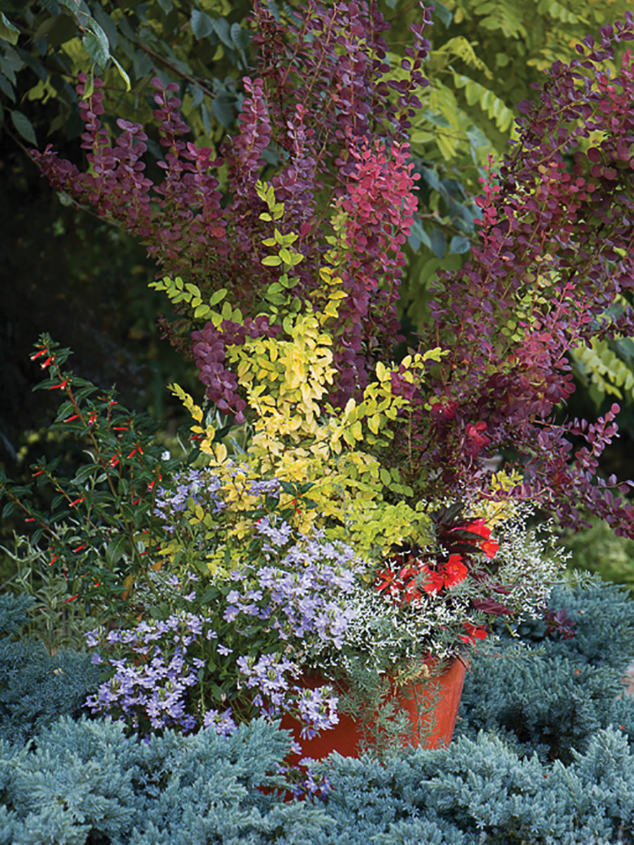 With such intense color, this container will be a focal point on the patio or porch. This bold statement piece could also be set within a garden border as seen here, repeating the color scheme of the pot plantings with the landscape itself.