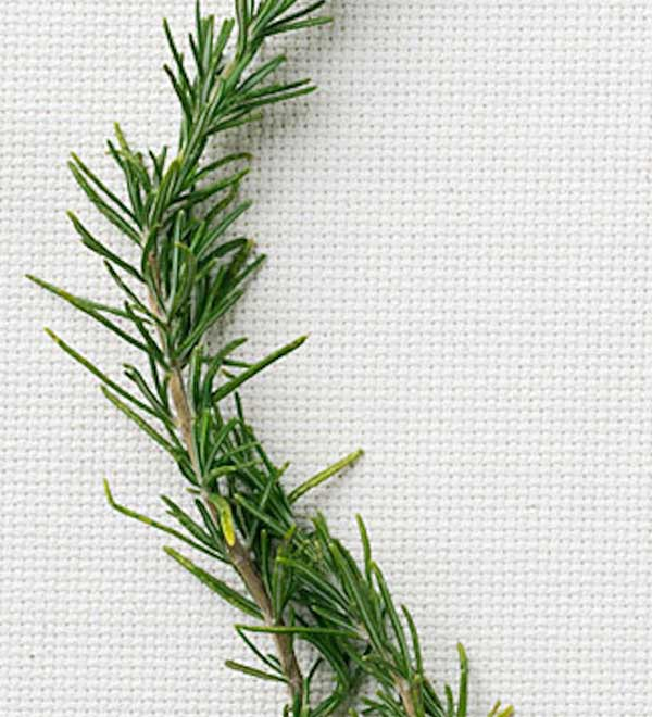 8 Fresh Rosemary Recipes