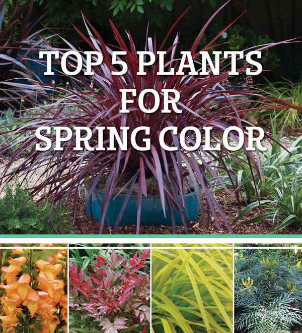 Top 5 Plants for Spring Color
