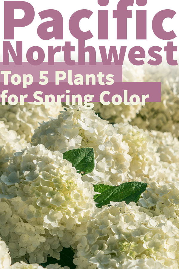 Top 5 plants for spring color in the Pacific Northwest
