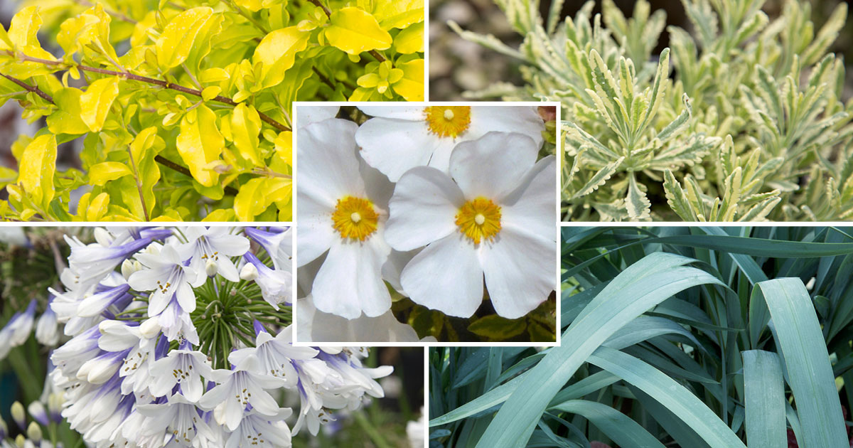 Top 5 Plants for Spring Color in Southern California