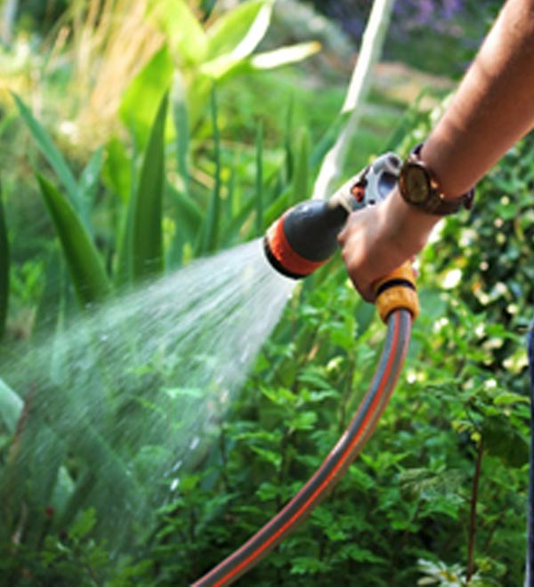 Watering Wisely: Growing a bountiful garden in the face of drought