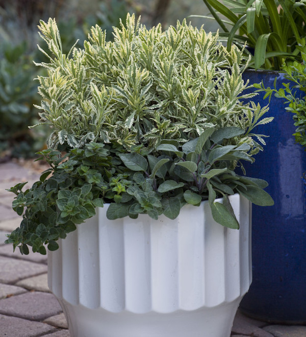 5 Tips for Using Containers in Your Landscape Designs