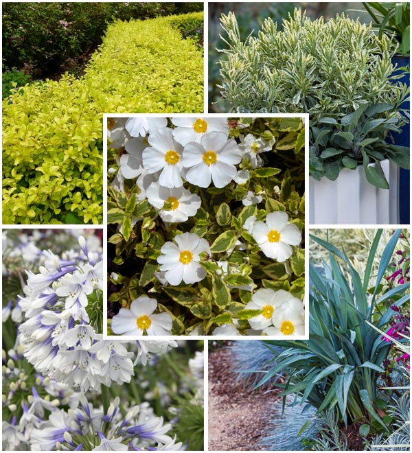 Southern California: 5 Plants for Spring Color