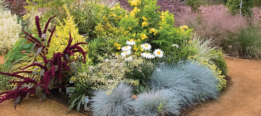Add A Touch Of Sunshine To Your Water Wise Garden